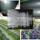 Commercial Tunnel Greenhouse Film for Tomato Planting                                                                         Quality Choice