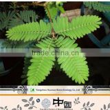 Mimosa hostilis root and bark powder, 5:1, 10:1, 20:1