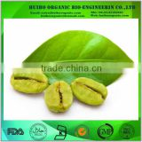 10%~50% Chlorogenic acids / Green coffee bean extract / Coffea Arabica P.E