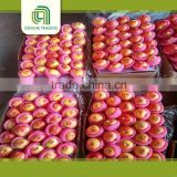 new crop fresh red china delicious gala apple fruit fresh red apple