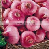 onion price ton types red onions lowest price fresh red onion