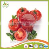 canned tomato paste gino roma brand tomato paste factory