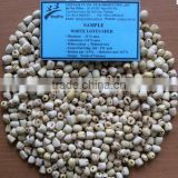 VIETNAM WHITE LOTUS SEEDS (+841657106604 - WHATSAPP)