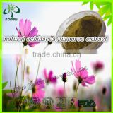 Natural Echinacea Purpurea Extract Powder