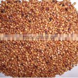 glutinous sweet red Sorghum with high starch red millet with husk
