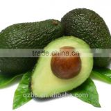 Moisturising emollient and superior skin penetrating for hair avocado seed oil extraction