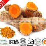Pharmaceutical Grade hot sale bulk curcumin powder