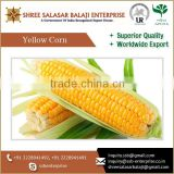 Hot Selling Best Quality Yellow Corn Maize Animal Feed At Low Export Price