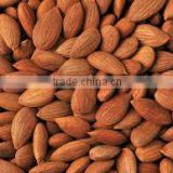Quality Processed Dried Apricot Kernels for sale