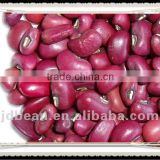 high quality red cowpea