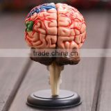 Education Toy Human brain model structure model assembled Anatomy dimensional model 32pcs set