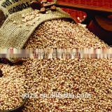 Looking for competitive sorghum price supplier