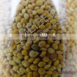 China Factory 100% organic pure tea pollen
