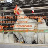 Haiti Poultry Farm Equipment -  A Type Battery Broiler Chicken Cage with Automatic Feeding & Drinking System 108 birds
