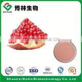 Wholesale Fresh Pomegranate Fruit Flavor Powder with Low Price
