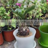 different size wholesale miniature plant pots with tray
