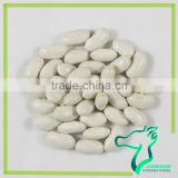 All Types of Dried White Kidney Beans For Canned