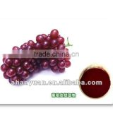 25% ,5%resveratrol natural plant extract Grape Skin Extract (GMP,cGMP)