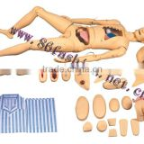 anatomical models,train model,skeleton model,manikin