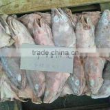 frozen fish head hake head for sale