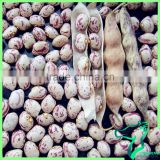 Round Type Speckled Kidney Beans China Dry Cranberry Heilongjiang