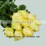 Promotional jasmin flower garland fresh cut rose flower peach avalanche rose for birthdays factory prize supply