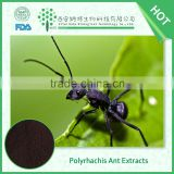 Super quality hot selling polyrhachis ant extracts, polyrhachis ant powder in low price