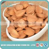 Factory suppliy raw apricot seeds, sweet apricot kernels, bitter apricot seed with good service