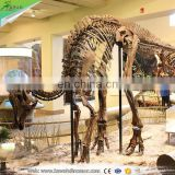 KAWAH High Quality Skeleton Replica Authentic Dinosaur Fossils For Sale
