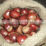 Good taste fresh chestnut with favorable price