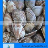 Frozen high quality shell clam