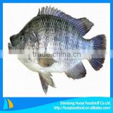 tilapia buyer
