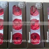 6-7 cm preserved rose big bud red rose with A grad quality from Kunming
