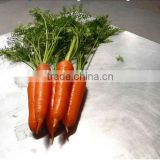 Chinese New Season Bulk Fresh Carrot