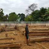 Teak Wood (Rough Logs) Origin Ecuador