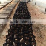 INquiry about Paotong root paulownia elongata roots cutting with certificate