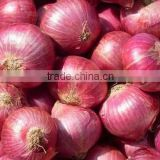 Red Onion India Supplier