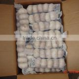 YUYUAN brand hot sail fresh garlic garlic oil bulk