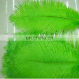 large green 60-65cm ostrich feather from south Africa