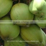 tender coconut/fresh young coconut/common cultivation type young coconut/green young coconut/young coconut exporter