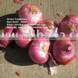 Fresh Red Indian Nashik / Pune Onion FRESH RED ONION FOR GULF / SOUTH EAST ASIAN COUNTRIES