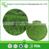 Bulk Supply High Quality Barley Grass Powder