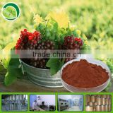Plant Extract 100% Natural Grape Seed Extract