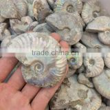 Rough Crystal Stone Rainbow Pattern Ammonite Fossil Stones For Sale