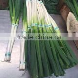 Fresh long onion/shallot from factory