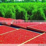 Organic Goji Berries Plant Seeds For Growing Nutrition Goji Wolfberry Fruit