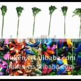 China Regional Feature and Plastic Material 3D Lenticular Sheet