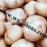 Fresh Potato from India
