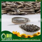 Hot Sell New Crop Striped Black Hybrid Sunflower Seed