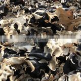 White Back Black Fungus with Lower Price
